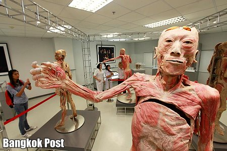 The Museum Of The Human Body Opens In Bangkok Thai Travel News