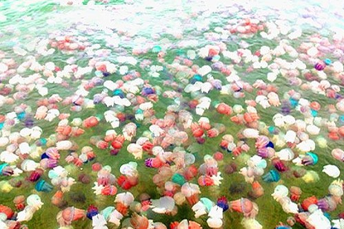 Colorful jelly fish in Rayong attract many curious tourists Thai