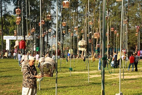 ASEAN Barred Ground Dove Festival 2017 in Yala