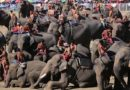 Amazing Surin's Elephant Round-Up 2017