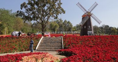 Poinsettia Flower Festival in Loei until January 2018