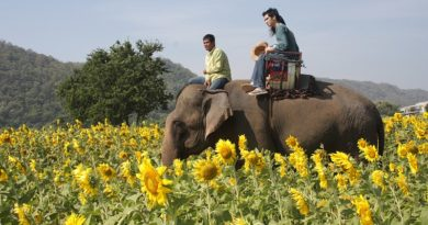 The flower fields of Central and Northeastern Thailand
